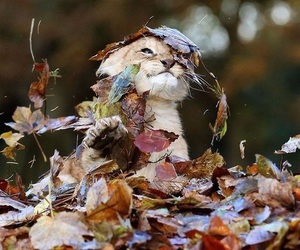 cute, lion, and leaves image