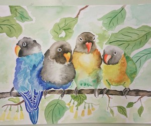birds, colourful, and nature image