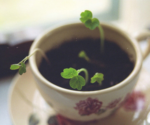 cup, flower, and grow image