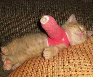 adorable, kitten, and hurted arm image