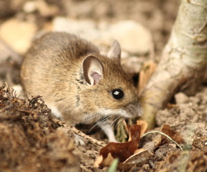 mouse, cute, and photography image