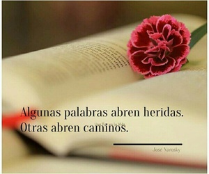 frases, palabras, and rosa image