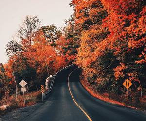 autumn, fall, and road image