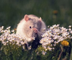 mouse, flowers, and cute image