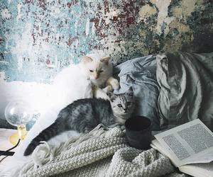 cats and photography image