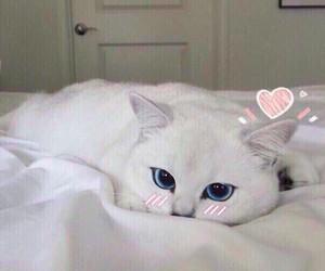 cat, котик, and кот image