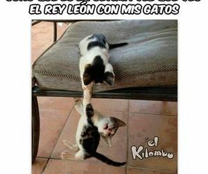 Gatos, gatitos, and el rey leon image