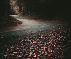 autumn, forrest, and fall image