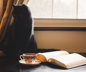 black cat, books, and cats image
