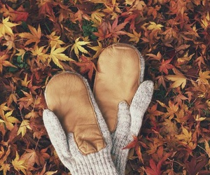 autumn, leafs, and mitten image