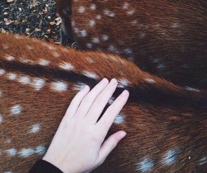 deer, animal, and hand image