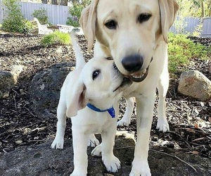 animal, dog, and cute image