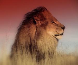 lions and rastafarian image