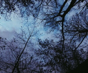 blue, sky, and trees image