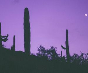 purple, cactus, and grunge image