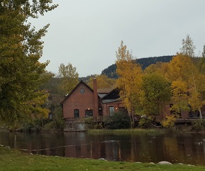 autumn, grey, and trees image