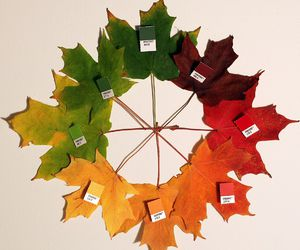 leaves, autumn, and pantone image