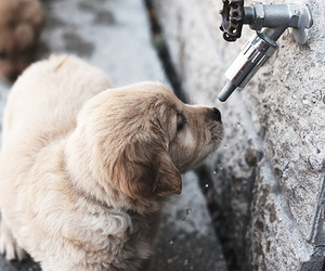 dog, puppy, and photography image