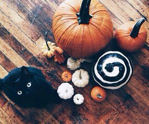 cat, pumpkin, and 31october image