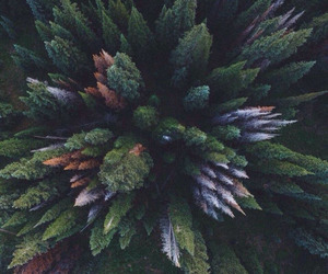 tree, nature, and hipster image