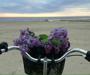beauty, lilac, and sunrise image