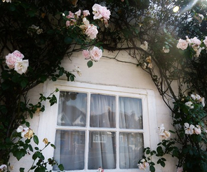 flowers, rose, and window image
