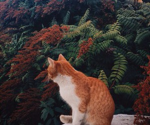 cat, nature, and plants image