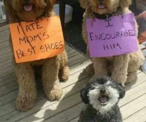 dog, cute, and funny image
