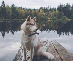 dog, trees, and nature image