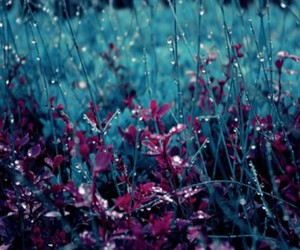 flowers, rain, and blue image
