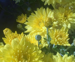 flowers, yellow flowers, and yellow image