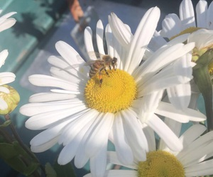 bees, flower, and yellow flower image