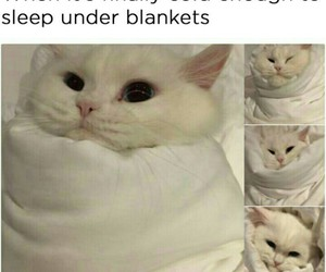 cats, funny, and winter image