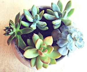 plant, succulents, and cactus image