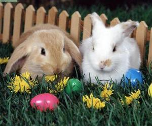 bunny and easter image