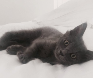 cat, cosy, and cute image
