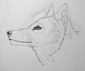 art, wolf, and inside image