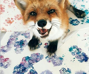 animal, fox, and red image