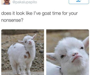 funny, goat, and lol image