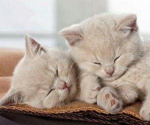 cats, kittens, and white image