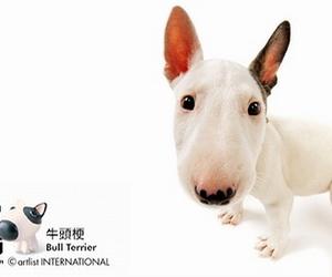 bull terrier image