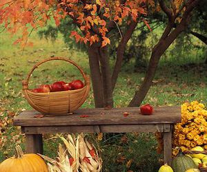 autumn, apple, and pumpkin image