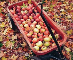 apples, autumn, and leaves image
