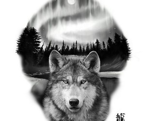 b&w, drawing, and wolf image