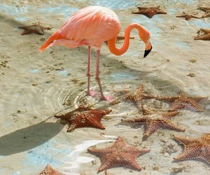 flamingo, pink, and starfish image