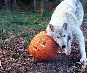 Halloween, 31october, and pumpkin image