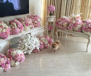 flowers and dog image
