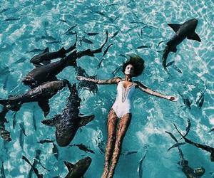 girl, summer, and shark image