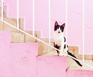 cat, meow, and pink image