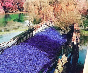 flowers, italy, and nature image